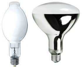 Bulb Mercury